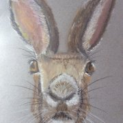 A Watchful Hare by Micky Tomlin