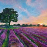 Lavender Fields by Jennifer  Collyer