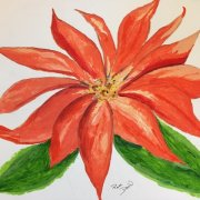 Poinsettia by Pam Dodd
